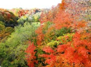 2015 Fall Color in Toronto Ontario 2015 安大略省多倫多市秋色